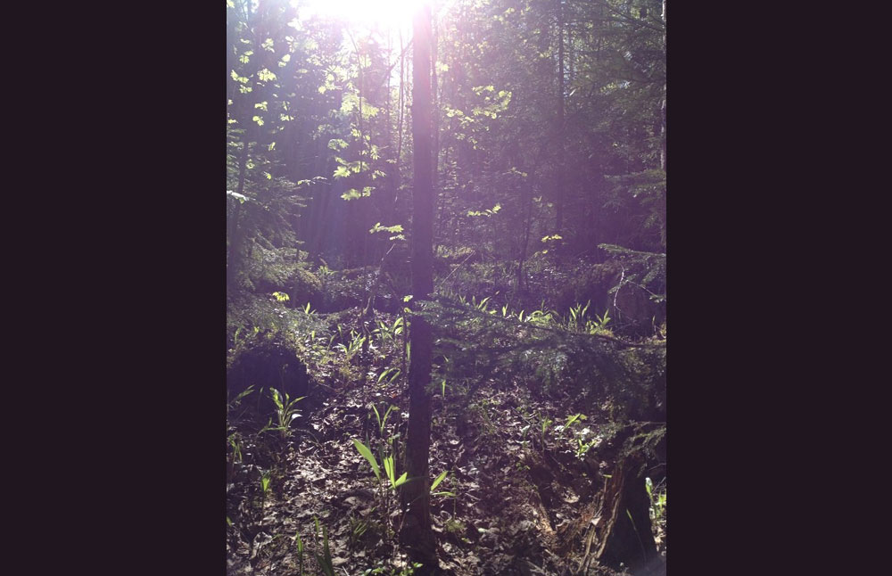 Ong Namo -joogakoulu - metsäjooga - LE COOL Tampere